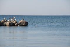 Gabbiani nel mare Immagini Stock Libere da Diritti