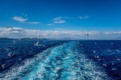 Gabbiani nel Mediterraneo Fotografia Stock Libera da Diritti