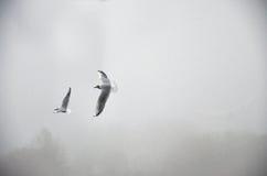 Gabbiani nella nebbia Fotografia Stock