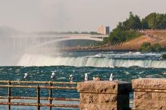 Gabbiani a Niagara Falls Fotografie Stock Libere da Diritti