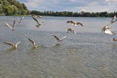 Gabbiani sopra l'acqua Fotografia Stock Libera da Diritti