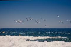 Gabbiani sopra l'oceano Immagini Stock
