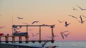 Gabbiani sopra la superficie del mare al tramonto stock footage