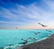 Gabbiani sotto un litorale di mare Fotografia Stock Libera da Diritti