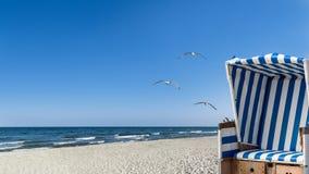 Gabbiani, spiaggia e una sedia di spiaggia Fotografia Stock