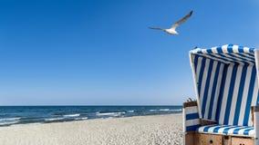 Gabbiani, spiaggia e una sedia di spiaggia Fotografie Stock Libere da Diritti