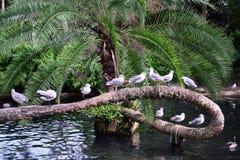 Gabbiani su un albero fotografia stock libera da diritti