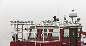 Gabbiani su una barca del pompiere Immagini Stock Libere da Diritti