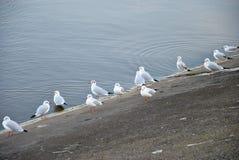 Gabbiani su una costa Fotografia Stock
