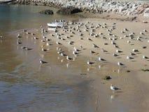 Gabbiani su una spiaggia con la sabbia fine Immagini Stock Libere da Diritti