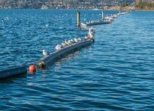 Gabbiani sui pontoni Fotografia Stock