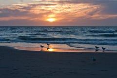 Gabbiani sui precedenti del tramonto, la riva del mare del Nord netherlands corse fotografia stock libera da diritti