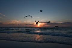 Gabbiani sui precedenti del tramonto, la riva del mare del Nord netherlands corse fotografie stock