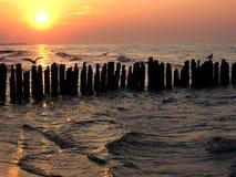 Gabbiani sul frangiflutti Fotografie Stock Libere da Diritti