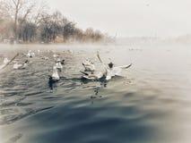 Gabbiani sul lago Fotografia Stock