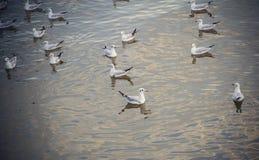 Gabbiani sull'acqua Fotografie Stock