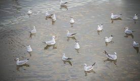 Gabbiani sull'acqua Immagini Stock