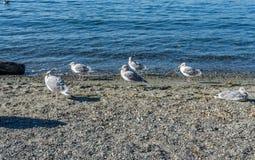 Gabbiani sulla spiaggia fotografie stock