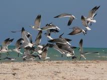 Gabbiani sulla spiaggia Fotografia Stock