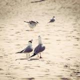 Gabbiani sulla spiaggia, fine su Immagine Stock