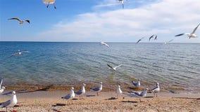 Gabbiani sulla spiaggia, un gruppo di gabbiani sulla spiaggia stock footage