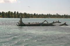 Gabbiani sulle pietre nel mare un giorno soleggiato immagini stock libere da diritti