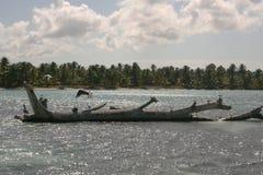 Gabbiani sulle pietre nel mare un giorno soleggiato immagine stock