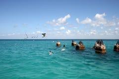 Gabbiani sulle pietre nel mare un giorno soleggiato fotografia stock
