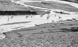 Gabbiani in una fila nel fiume Immagini Stock Libere da Diritti