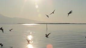 Gabbiani vicino alla spiaggia al mar Egeo di Smirne stock footage
