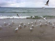 Gabbiani volanti sulla spiaggia a Gdynia giorno nuvoloso fotografia stock libera da diritti