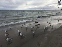 Gabbiani volanti sulla spiaggia a Gdynia giorno nuvoloso fotografia stock
