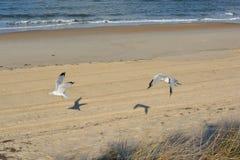 Gabbiani in volo sulla spiaggia Fotografia Stock Libera da Diritti