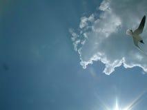 Gabbiano al sole Fotografia Stock