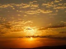 Gabbiano al tramonto Fotografie Stock