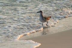 Gabbiano alla spiaggia Fotografia Stock Libera da Diritti
