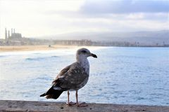 Gabbiano alla spiaggia California di Hermosa nella contea di Los Angeles, California, Stati Uniti immagine stock