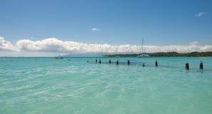 Gabbiano - Anse de Sainte Anne - Guadalupa - isola tropicale caraibica Fotografia Stock