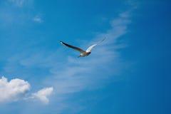 Gabbiano in ascesa contro il cielo blu scuro Fotografie Stock Libere da Diritti
