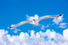 Gabbiano bianco che si libra nel cielo Volo del ` s dell'uccello Gabbiano sul fondo del cielo blu Fotografie Stock Libere da Diritti