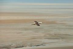 Gabbiano bianco che sorvola spiaggia atlantica Immagine Stock Libera da Diritti