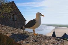 Gabbiano bianco che sta su una parete di pietra Alta marea vicino all'abbazia antica di Mont Saint-Michel ai precedenti La Norman Fotografia Stock Libera da Diritti