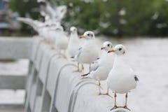 Gabbiano bianco che sta sul ponte Immagini Stock Libere da Diritti