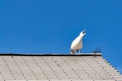Gabbiano bianco su un tetto Immagini Stock