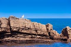 Gabbiano bianco sulla spiaggia rocciosa Fotografia Stock Libera da Diritti