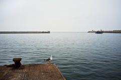 Gabbiano che aspetta i pescherecci per arrivare vicino al portone del porto immagini stock libere da diritti