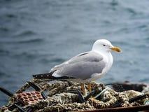 Gabbiano che aspetta sopra l'attrezzatura di pesca immagini stock libere da diritti