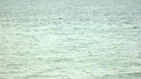 Gabbiano che galleggia sulla superficie del mare video d archivio