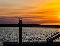 Gabbiano che guarda il tramonto dorato immagini stock libere da diritti