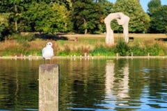 Gabbiano che si appollaia su una posta di legno in Hyde Park Fotografia Stock